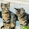 Katzenbilder: Wettbewerb