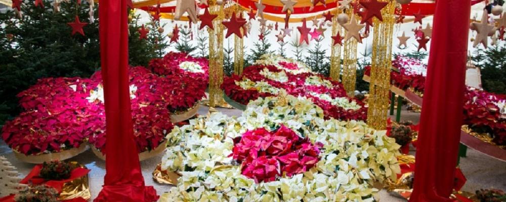 Advent im Blumengarten