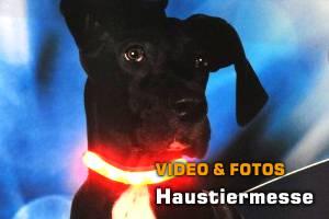 Haustiermesse: Fotos, Video!